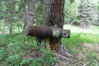 Tendeur de câble en limite de forêt, utilisant un conifère en tant que point d'amarrage